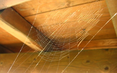 The Top 7 Reasons You Need to Climb Through Your Sales Attic
